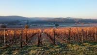 Dégustation des vins Jean Baldes